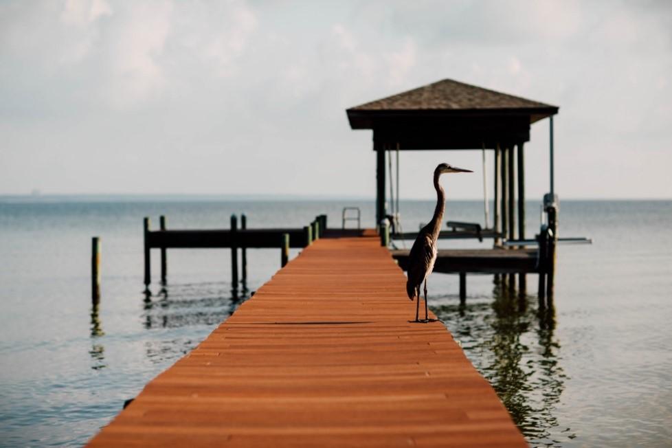 Dock with bird