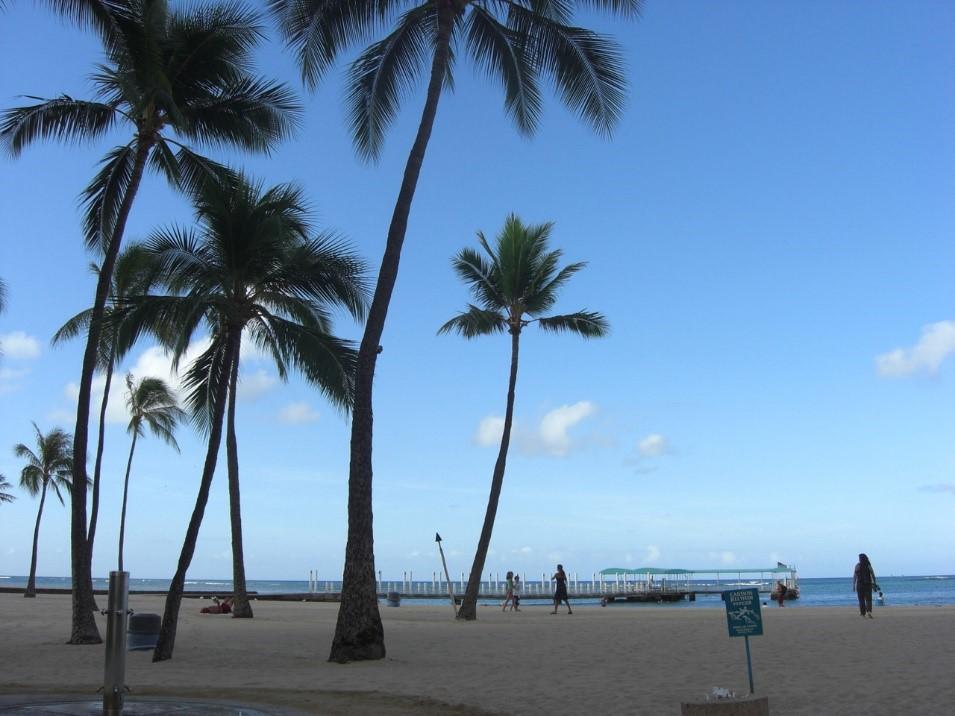 palmbeach scene